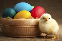 Поздравляем с Великим Светлым праздником Пасхи!