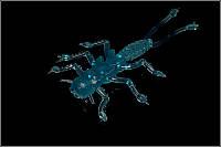 Мягкая приманка MicroKiller Веснянка 35мм Синий Флюо