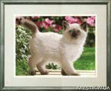 Ткань с рисунком для вышивки бисером Сиамский котенок