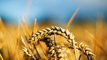 Реформи в АПК дозволять збільшити ВВП України на 4% - Світовий банк