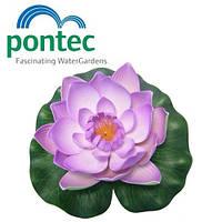 Декоративная плавающая лилия для пруда Pontec PondoLily Violet