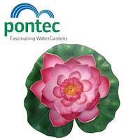 Декоративная плавающая лилия для пруда Pontec PondoLily Red