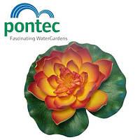 Декоративная плавающая лилия для пруда Pontec PondoLily Orange