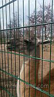 Забор из сварной сетки Кольчуга 5*5*5 3*0.63