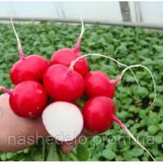 Семена редиса Естер 1 кг Marawa Seeds
