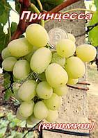 Сорт винограда среднего срока созревания кишмиш Принцесса
