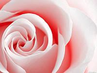 Женские ароматы от Lancôme