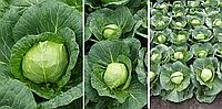 Семена капусты Престар F1 2500 cем. Takii Seeds