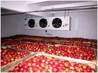 Камера для  хранения овощей