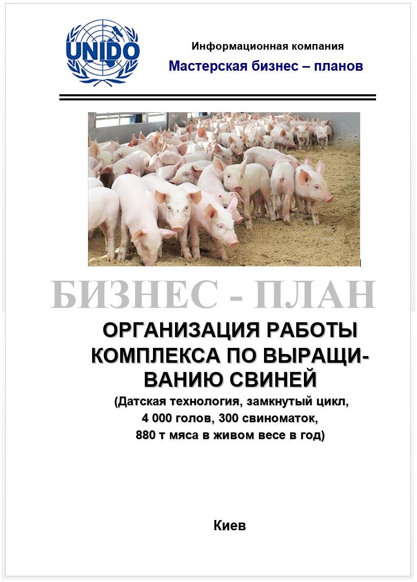 Бизнес-план для выращивания свиней
