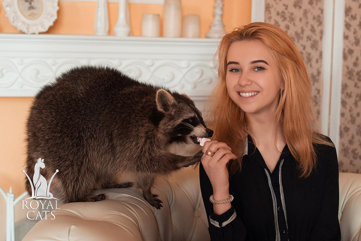 Аренда ручного енота полоскуна Жоры - Элитный питомник экзотических домашних кошек Royal Cats в Киеве