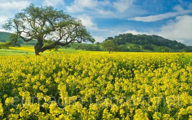Как добиться максимальной продуктивности при выращивании рапса