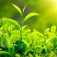"""Тоник """"зеленый чай"""