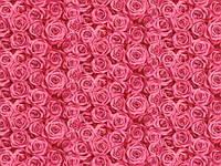 Обои Роза 121-V305-02