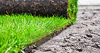 Качественная укладка газона