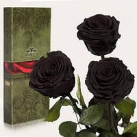 Три долгосвежих розы Черный Бриллиант в подарочной упаковке (не вянут от 6 месяцев до 5 лет)