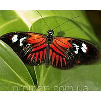 Фотокартина на холсте Бабочка