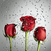 Фотокартина на холсте Розы на сером, фото 1
