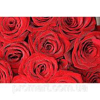 Фотокартина на холсте Розы