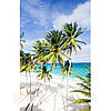 Фотокартина на холсте Пальмы на пляже