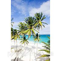 Фотокартина на холсте Пальмы на пляже, фото 1