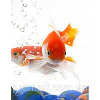 Фотокартина на холсте Золотые рыбки в аквариуме, фото 1