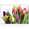 Фотокартина на холсте Тюльпани на белом