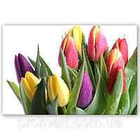 Фотокартина на холсте Тюльпани на белом, фото 1