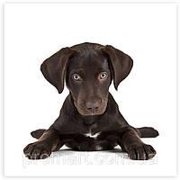 Фотокартина на холсте Черный щенок