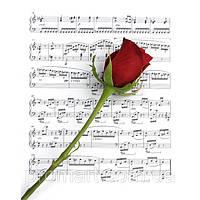 """Фотокартина """"Троянда на нотах"""""""
