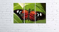 Модульная картина на холсте 3 в 1 Бабочка 60х90 см