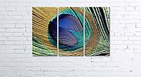 Модульная картина на холсте 3 в 1 Перо павлина 60х90 см