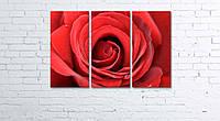 Модульная картина на холсте 3 в 1 Большая роза 60х90 см