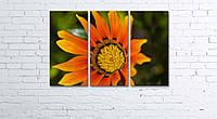 Модульная картина на холсте 3 в 1 Оранжевый цветок 60х90 см