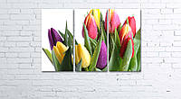 Модульная картина на холсте 3 в 1 Тюльпани на белом 60х90 см