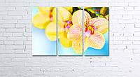 Модульная картина на холсте 3 в 1 Орхидеи 60х90 см