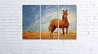 Модульная картина на холсте 3 в 1 Рыжий конь 60х90 см, фото 1
