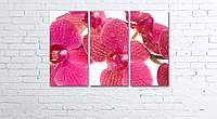 Модульная картина на холсте 3 в 1 Розовая орхидея 60х90 см, фото 1