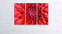 Модульная картина на холсте 3 в 1 Красный георгин 60х90 см, фото 1