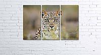 Модульная картина на холсте 3 в 1 Леопард 60х90 см, фото 1