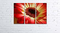 Модульная картина на холсте 3 в 1 Красно-желтый цветок 60х90 см, фото 1