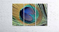 Модульная картина на холсте 3 в 1 Перо павлина 80х120 см