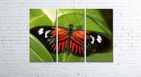 Модульная картина на холсте 3 в 1 Бабочка 80х120 см