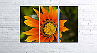 Модульная картина на холсте 3 в 1 Оранжевый цветок 80х120 см