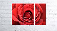 Модульная картина на холсте 3 в 1 Большая роза 80х120 см