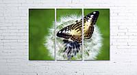 Модульная картина на холсте 3 в 1 Бабочка на одуванчике 80х120 см