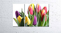 Модульная картина на холсте 3 в 1 Тюльпани на белом 80х120 см