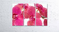 Модульная картина на холсте 3 в 1 Розовая орхидея 80х120 см, фото 1