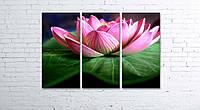 Модульная картина на холсте 3 в 1 Розовый лотос 80х120 см, фото 1
