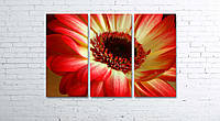 Модульная картина на холсте 3 в 1 Красно-желтый цветок 80х120 см, фото 1